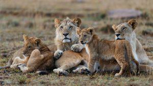 Tanzania safari best places to visit