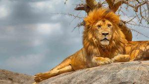 Serengeti and Zanzibar Packages