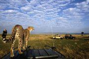 14 days Tanzania safari and zanzibar
