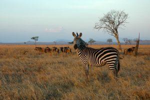 3 Day Mikumi Safari from Dar es Salaam