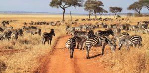 3 day safari north Tanzania from Zanzibar