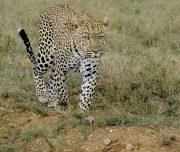 4 Days Safari Tanzania
