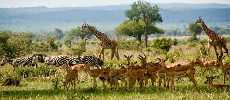 safari from dar es salaam