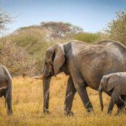 Tanzania Safari Tarangire