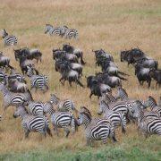 Safari with Family 2 weeks