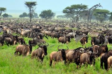 Ngorongoro Serengeti Safari