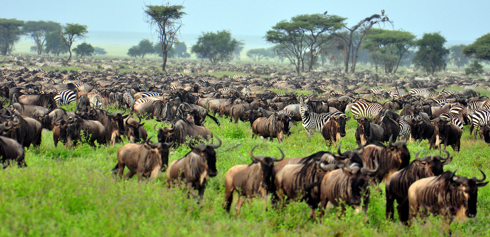 Ngorongoro Serengeti Safari