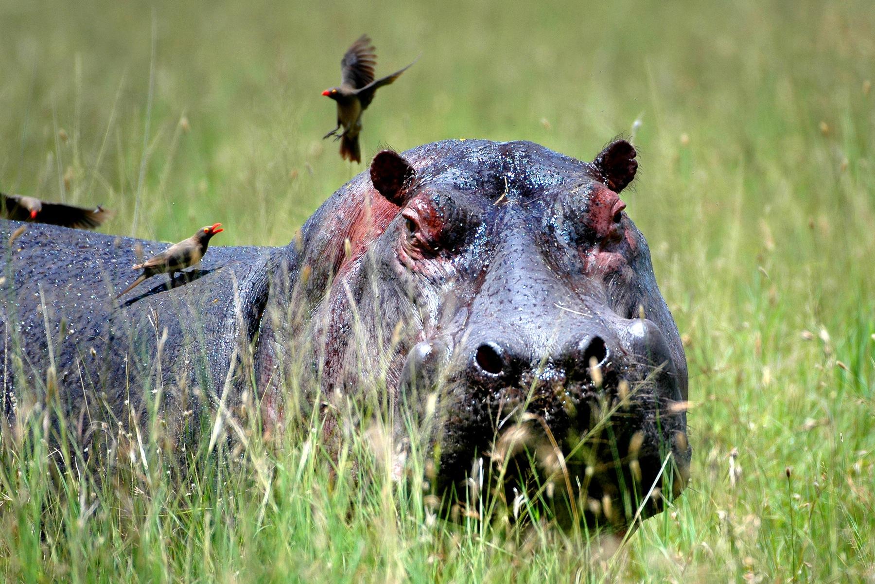 selous safari short from Dar es Salaam
