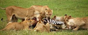 short serengeti safari