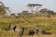 3 day Serengeti safari Seronera