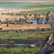 safari ngorongoro and serengeti