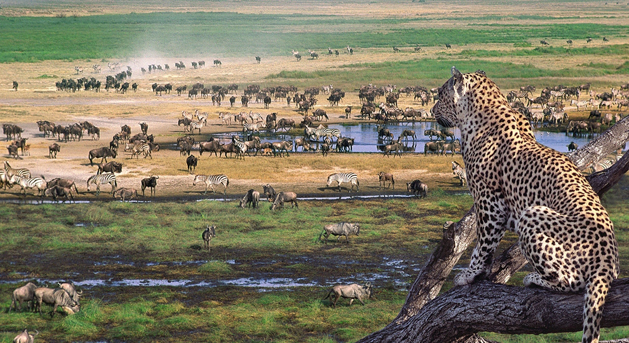 Tanzania Wildlife Safaris And Tours