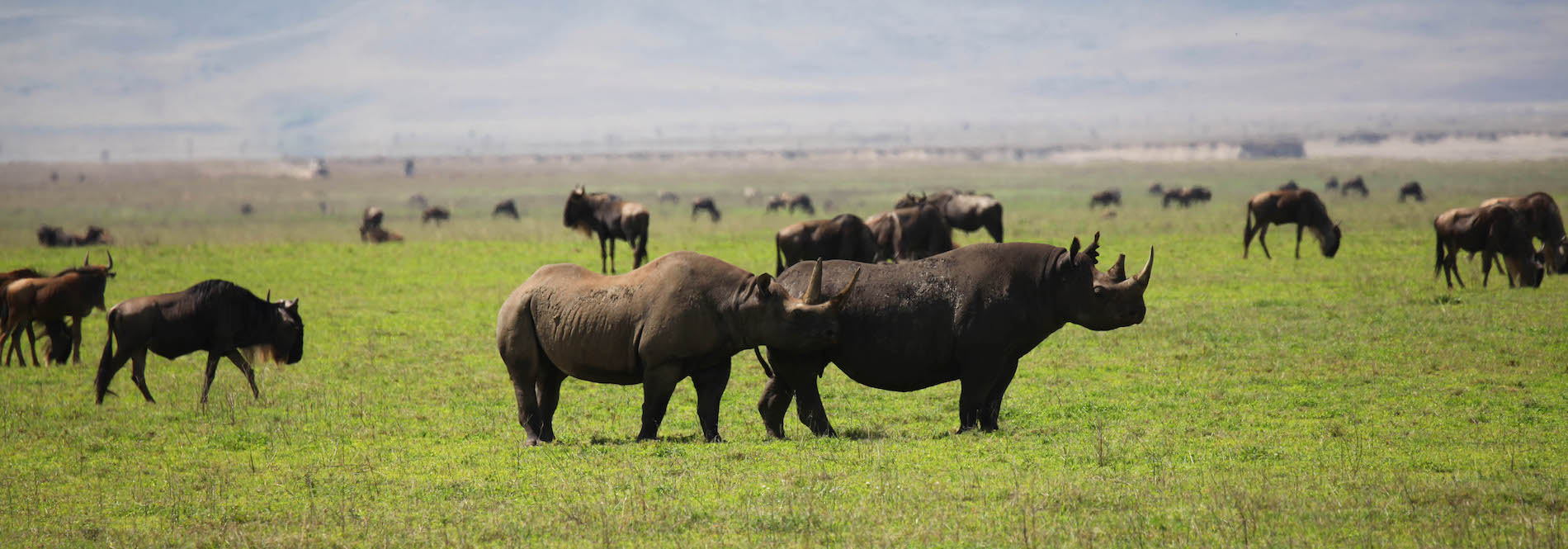 3 day Camping safari Tanzania