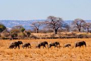 3 days Tarangire Safari