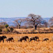 3 days Tarangire Safari