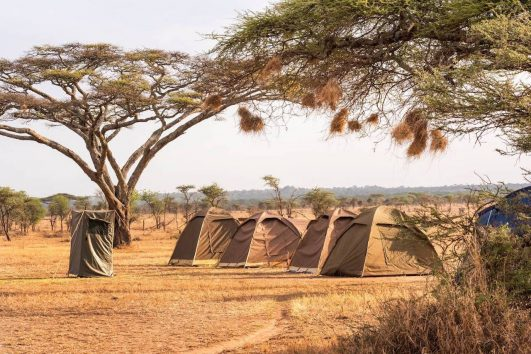 3 days budget camping safari Tanzania