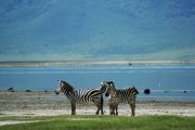 Lake Manyara 3 days