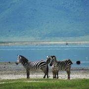 Lake Manyara 3 days