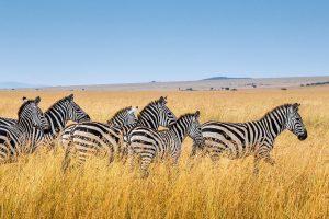 tanzania camping 5 days