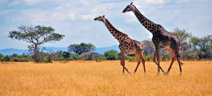 Tanzania Safari Testimonials