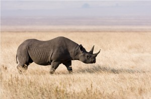 Ngorongoro Crater and Conservation Area