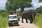safari tanzania 4 days