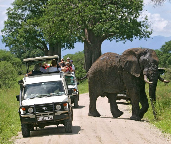 safari tanzania 4 days