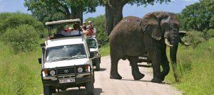 Safari Tarangire National Park