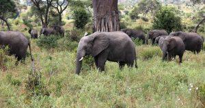 affordable camping safari Tanzania
