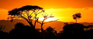 Booking Conditions Safari Tanzania