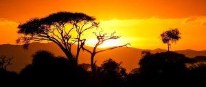 Booking Conditions Safari Tanzania