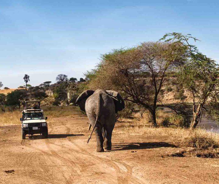 Selous safari from Zanzibar elephant