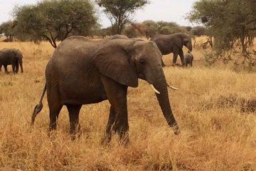 5 Days Tanzania Lodge Safari