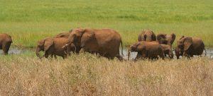 5 days Tanzania safari