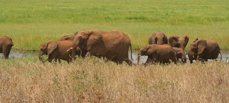 5 days lodge Tanzania safari