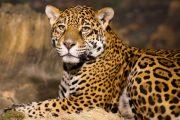 8 day safari zanzibar