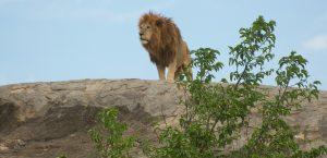 six days camping safari tanzania
