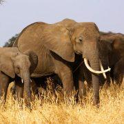one week safari Tanzania