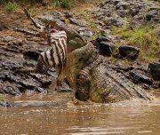 Migration safari Masai Mara Serengeti