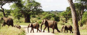 how to book a safari in Tanzania