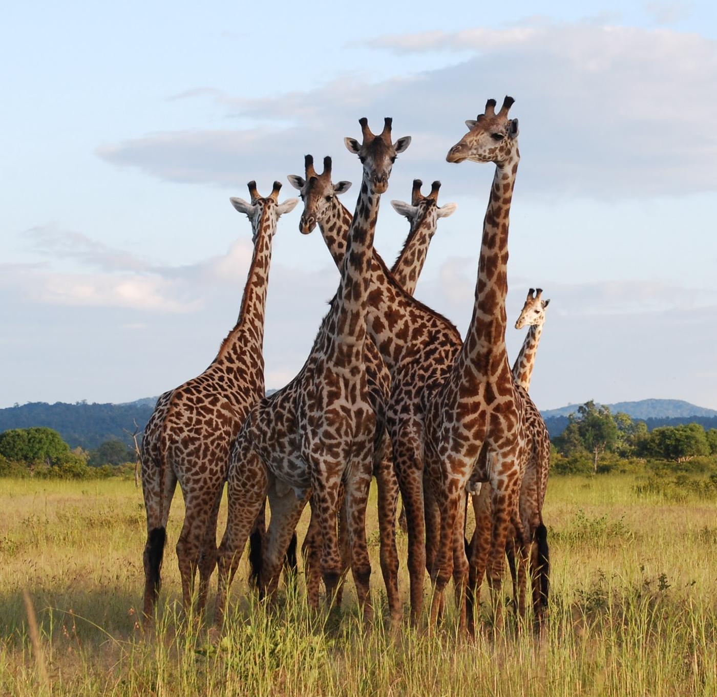 Mikumi-national-park-south-tanzania
