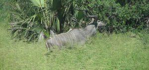 Ruaha South Tanzania