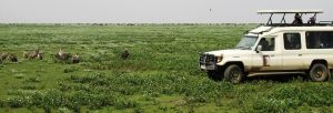 tanzania safari game drives