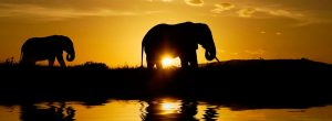 Tanzania Safaris Sunset