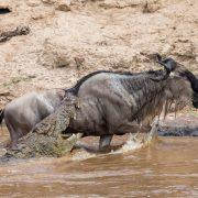 safari Kenya Tanzania Zanzibar