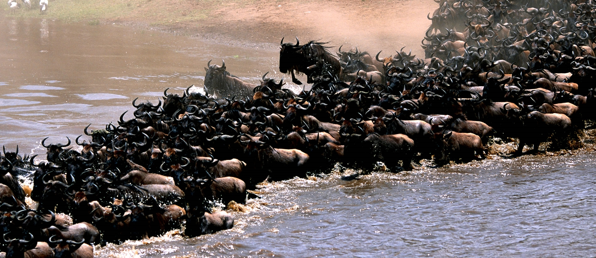 Great Migration Africa Tours