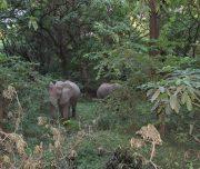 Elephants Lake Manyara