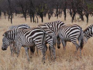 north Serengeti safari