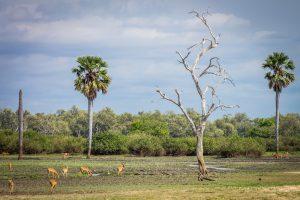 selous-tanzania-wildlife