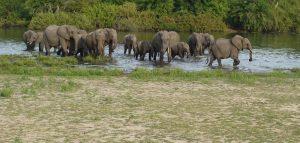 Safari Southern Tanzania